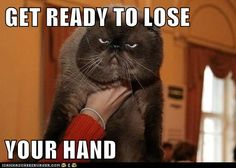 Funny pictures with captions hilarious grumpy cat 16 Ideas Animal Captions, Funny Animal Memes, Cute Funny Animals, Funny Cute, Cute Cats, Funny Memes, Funny Pictures With Captions, Funny Animal Pictures, Funny Photos