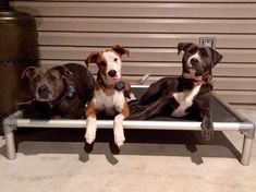 Vote for The 3 Stooges and Dog people of Livingston Parish in Louisiana  could win 5 free dog beds.