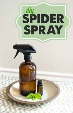 Don't just kill spiders with conventional pest control, keep them away to begin with with this super simple and cheap 2 ingredient natural spider spray! 15-20 drops peppermint EO Water to fill 16 oz spray bottle 16 oz spray  Via bottlehappymoneysaver.com