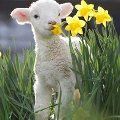 Pretty lil' lamb