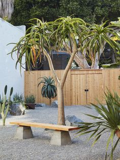 When a Japanese-style garden meets the southern California desert, the results are very Zen in a serene gravel courtyard landscape architecture firm Terremoto designed for Mohawk General Store in Santa Monica. Mid Century Landscaping, Courtyard Landscaping, Backyard Projects, Garden Projects, Garden Ideas, Backyard Ideas, Balcony Herb Gardens, Great Buildings And Structures, Modern Buildings