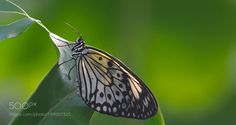 paper kite by philippe6
