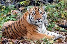 Сохраним редкие виды WWF