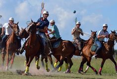 Gathering with all the top Polocrosse players at Antelope Park. A weekend with speed and adrenalin! Picture Video, Equestrian, Camel, Action, Polo, Horses, Pictures, Animals, Photos