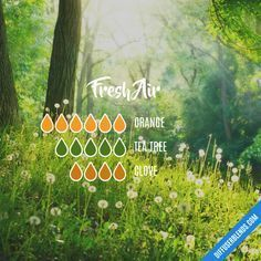 oil cleaning Fresh Air - Essential Oil Diffuser Blend Fresh Air - Essential Oil Diffuser Mixture is Essential Oil Scents, Essential Oil Diffuser Blends, Essential Oil Uses, Doterra Essential Oils, Doterra Blends, Doterra Diffuser, Yl Oils, Cinnamon Oil Uses, Essential Oil Combinations