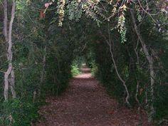 Jardín del Pazo de Fefiñáns - Bodegas Gil Armada (Cambados, Pontevedra)