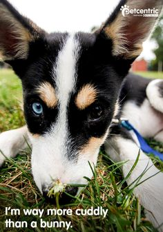 """Planning on hosting an """"egg"""" hunt with your dogs? First, pick a venue (such as a dog park) and let all of your friends know. Then collect supplies and prep for the event. When it's time for the hunt, have your guests and their dogs walk around on leashes to start the fun!"""