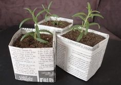 newspaper pots for seedlings