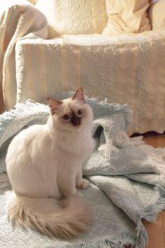 belo gato