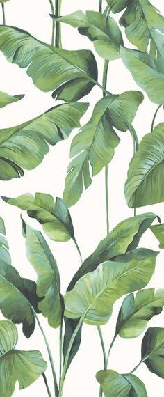 Buy Online Wallpaper At Wallpaperwebstore More Information Tropical Banana Leaves