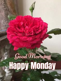 Good Morning Flowers Pictures, Good Morning Images, Good Morning Quotes, Good Morning Happy Monday, Telugu Inspirational Quotes, Mornings, Bom Dia, Happy Monday, Good Morning Imeges