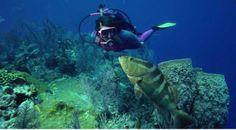 Santa Maria Surfing Beach Diving Center - School, #Paros activities, Cyclades, Greece       www.paroseasybooking.gr