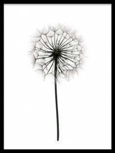 Fin botanisk plakat som passer bra i svart hvit innredning