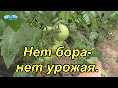 Veg Garden, Small Farm, Farm Gardens, Gardening Tips, Soda, Vegetables, Youtube, Appetizers, Tomatoes