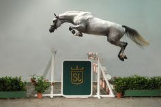 That's a lot of air under this free jumping horse