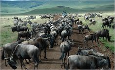 tanzania. Would love to see the Great Migration one day.