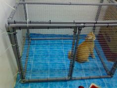 diy cat cage | Sherbet, modelling inside the cat cage in the kitty room.