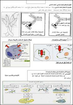 جديد ملخص المناعة كاملة Map, Comics, Location Map, Maps, Cartoons, Comic, Comics And Cartoons, Comic Books, Comic Book
