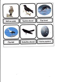 třídění -tažní a stálí ptáci Environmental Education, Batman, Birds, Superhero, School, Fictional Characters, Zoology, Bird, Fantasy Characters
