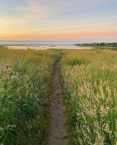 "The Guidebook of Cape Cod on Instagram: ""A Cape Cod rule: always follow the paths to the sea ✨Thanks for sharing, @capeliving! Tag us in your Cape Cod photos for a chance to be…"" Thanks For Sharing, Guide Book, Cape Cod, Massachusetts, Paths, Country Roads, Thankful, Sea, Instagram"
