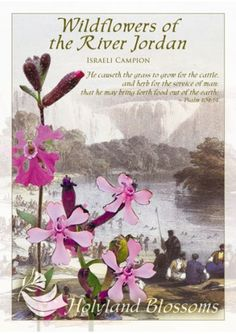 http://www.holylandblossoms.com/the_isreali_campion#.UWsyMLVJOAg #IsraeliCampion #WildflowersoftheRiverJordan #HolylandBlossoms