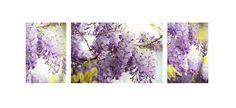 Wisteria Photograph - Beauty Of Wisteria. Triptych by Jenny Rainbow Triptych Art, Spa Center, Meditation Center, Wisteria, Fine Art Photography, Bedroom Decor, Tapestry, Rainbow, House Design