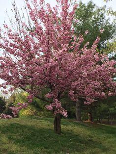 Spring in full bloom 2015