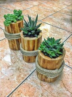 Backyard Landscaping Designs- Convert Your Backyard into Something Useful! Bamboo Planter, Wooden Planters, Succulent Gardening, Succulent Terrarium, Garden Crafts, Garden Projects, Deco Cactus, Inside Plants, House Plants Decor