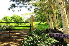 Mahi Oli'Oli--6 acre SeaView, QUIET - vacation rental in Volcano, Hawaii. View more: #VolcanoHawaiiVacationRentals