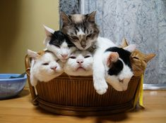 Thy will soon be a basket of mischief