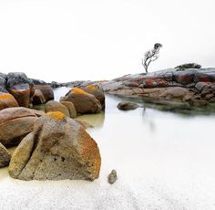 A lonely tree standing guard over the rocks at the Bay of Fires on the East Coast. Image sent in by Simon Beedle Photography