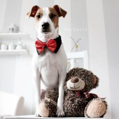 Riley a jack russell is Holiday party ready in his new Fetch red & black tie $9.99 www.fetchdogfashions.com #puppy #dog #dogclothing #dogapparel #dogboutique #dogcouture #petboutique #doghoodie #custommade #designer #cute #cutedog Black Tie, Red Black, Dog Pictures, Cute Pictures, Boy Dog Clothes, Critters 3, Jack Russell Dogs, Dog Fashion, Jack Russells