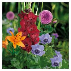 Cut Flower Collection - 20 pack