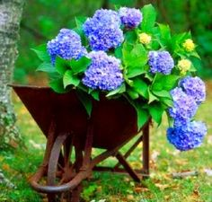 Great garden feature- glad to find a new purpose for a trusty old wheelbarrow!