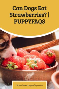 Can Dogs Eat Strawberries, Freezing Strawberries, Dehydrated Strawberries, Dried Strawberries, Fruits For Dogs, All Fruits, Strawberry Health Benefits, Healthy Body Weight, Dog Diet