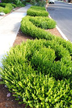 14 Clever Ways to Landscape a Sidewalk --> http://www.hgtvgardens.com/hardscaping/walk-this-way-sidewalk-landscaping?s=6&soc=pinterest
