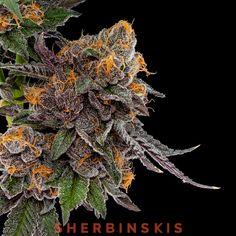 Sherbinski(SHERBINSKIS) (Sherbinski415) on Pinterest