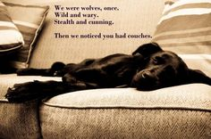 need dog foster homes meme - Google Search