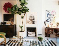 árbol de higo en sala de estar