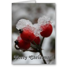 Snow-covered Rose Hip Merry Christmas! Card