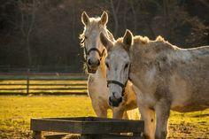 Horses Grazing; New Jersey USA [OC][6000x4000] - http://ift.tt/2jJ6yC7