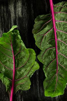 Swiss Chard by DanSchultzPhoto Fresh Vegetables, Fruits And Veggies, Vegetables Photography, In Season Produce, Fruit And Veg, Kraut, Food Design, Raw Food Recipes, Fresco