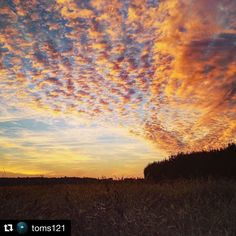 #Repost @toms121  #umbria #umbrians #volgoumbria #volgoitalia #volgoperugia #tourism #italia #italy #umbriatourism #igersumbria #land #landscape #campagna #sky #clouds #cloudstagram #trasimenolake #trasimeno #lagotrasimeno #countryside #agricoltura #agriculture #ground #road #walking #agri #grano #wheat