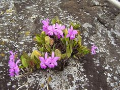 Cuál es el sustrato adecuado para cada tipo de orquídeas Cattleya Orchid, Orchids Garden, Wild Orchid, Orchid Care, Habitats, Greenery, Flora, Pretty, Nature