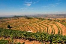 PINORD - The first winery in the whole of Spain to have its wine issued with an international certificate of biodynamic farming by Demeter. / La primera bodega espanyola en obtenir la certificació internacional Demeter.