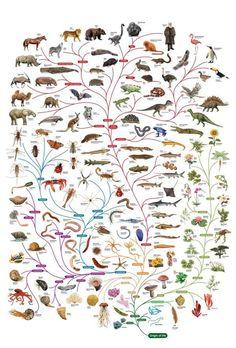 Por que você deve parar de acreditar na evolução