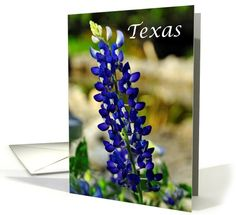 Beautiful Texas Bluebonnet State Specific...   Greeting Card Universe
