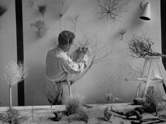 Designer house by Charles Eames showing desert plants mounted on wall of his studio.