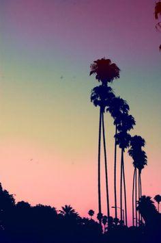 Pôr do sol na california (EUA) Os coqueiros são fonte de inspiração para estampas nesse verão.