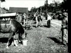 Reckless…the mare. This horse was a pack horse during the Korean war, and she carried recoilless rifles, ammunition & supplies to Marines. Horse Story, My Horse, War Horses, Horse Videos, Staff Sergeant, Korean War, Horse Racing, Beautiful Horses, American